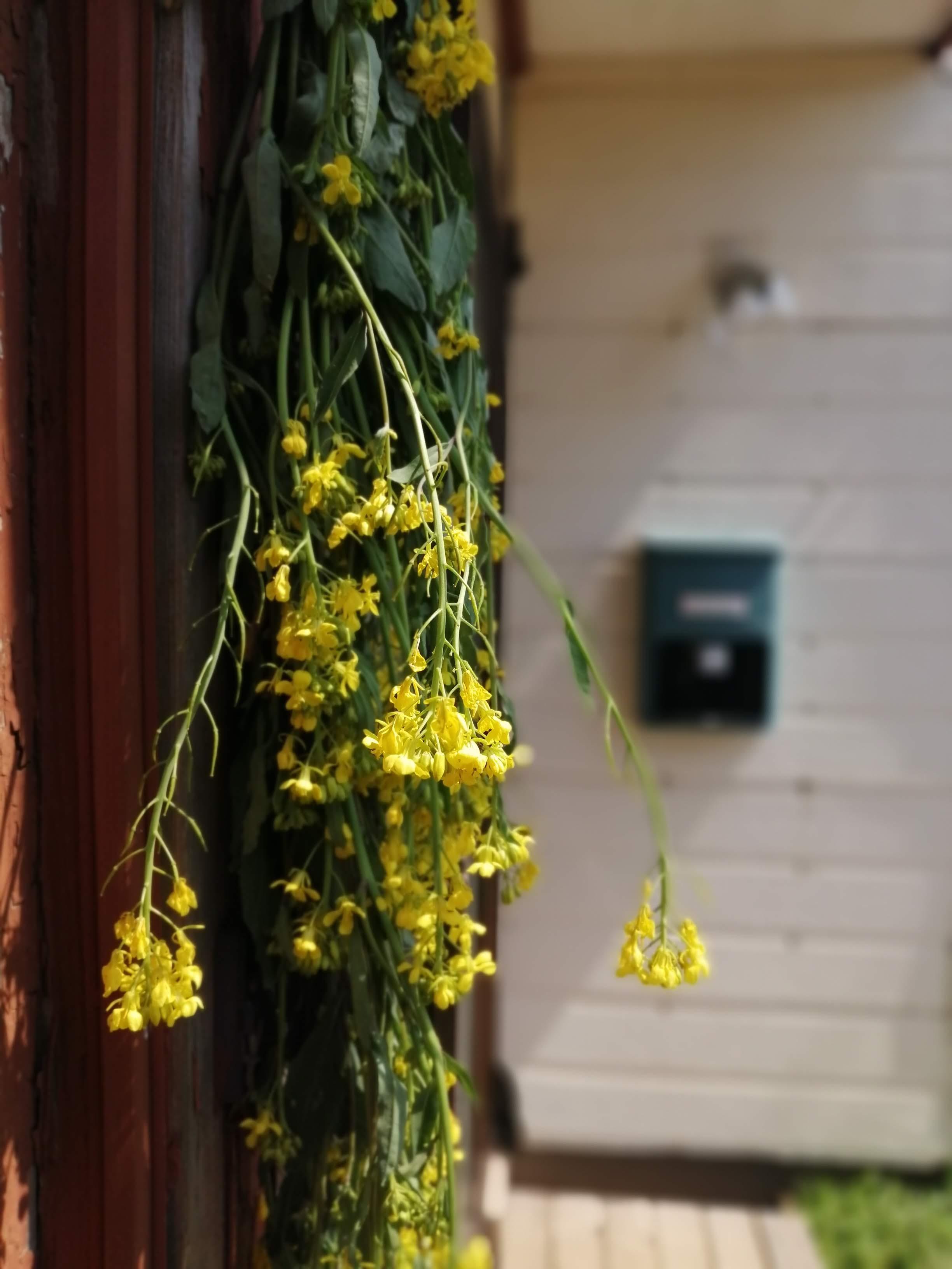 STUDIO菜の花